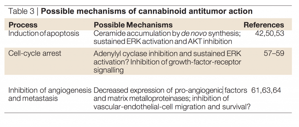 Possible mechanisms of cannabinoid antitumor action