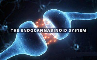 Basics of the Endocannabinoid System for Cannabis Nurses