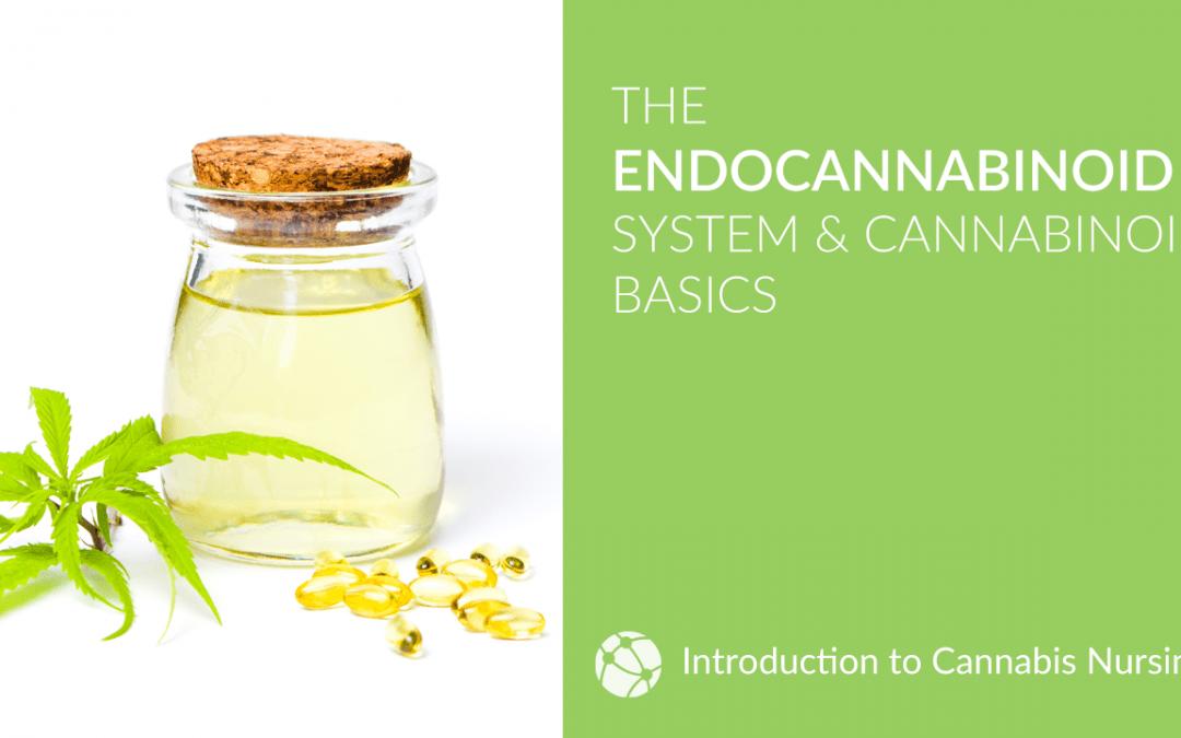 The Endocannabinoid System & Cannabinoid Basics for Cannabis Nurses