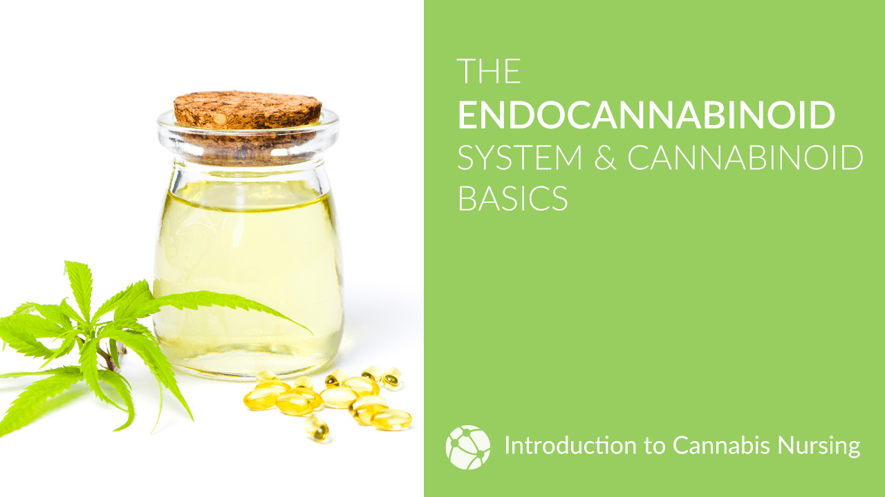 Endocannabinoid System & Cannabinoid Basics for Cannabis Nurses
